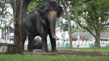 Elephant enjoys shower in a green park in a city Wideo