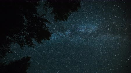 Starry sky timelapse with MIlky Way Galaxy and trees