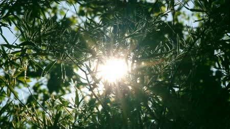 napfény : bright sun shines through tree foliage