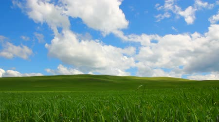 horizont : green hill with grass under cloudy sky - timelapse Stock mozgókép