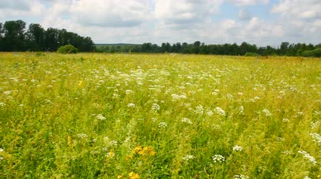 pans : pan landscape with summer meadow Stock Footage