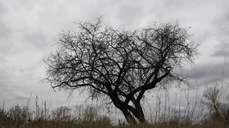 lonely : dry tree under moody overcast sky