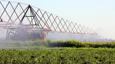 brambory : irrigation of a potato field