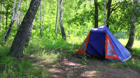 sátor : camping tent in summer birch forest