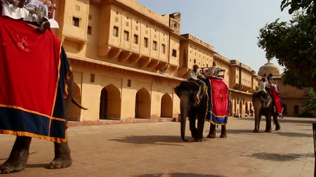 âmbar : tourists on elephants in Jaipur fort India