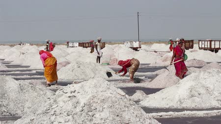 sůl : salt mining on Sambhar lake in India
