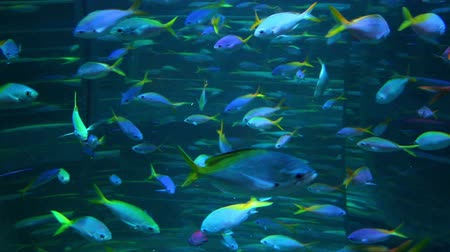 underwater video : school of many fish in aquarium Stock Footage