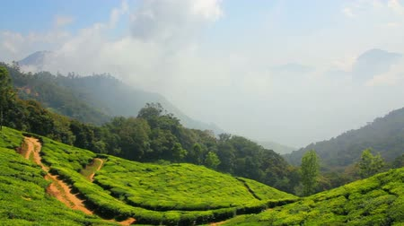 plantio : mountain tea plantation in Munnar Kerala India