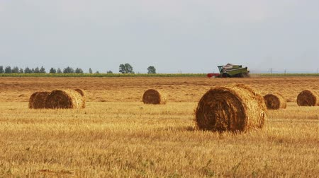 kombajn : landscape with harvested bales of straw and combine-harvester