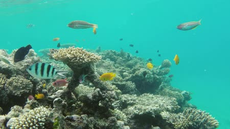 podwodny swiat : Coral and fish in the Red Sea - Egypt Wideo