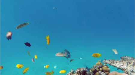 множество : Many fish swim among corals in the Red Sea - Egypt