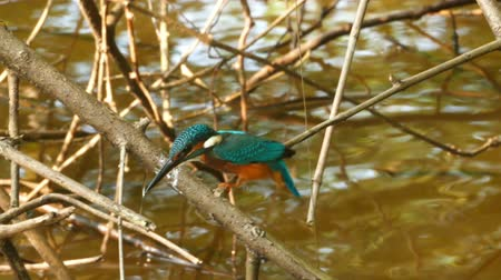 nó : Kingfisher bird on branch of tree