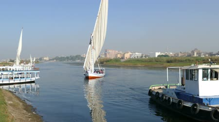 nil : CAIRO, EGYPT - DECEMBER 05, 2014: touristic feluca boat on Nile river in Luxor, Egypt Stok Video