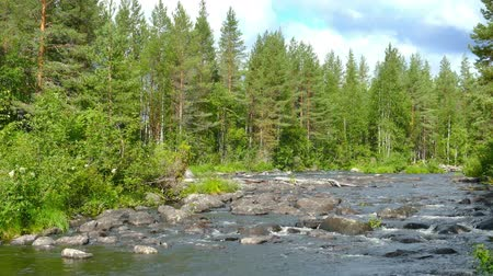 finlandês : landscape with river and forest in Karelia