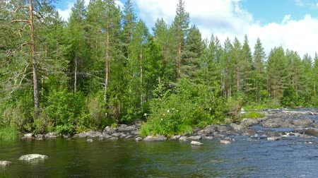 finlandês : landscape with river and forest in Karelia, 4k