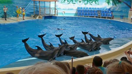 yunus : ANAPA, RUSSIA - CIRCA AUG 2016: Performance of the dolphins. Show with sea animals in Anapsky Dolphinarium.
