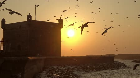 марокканский : Famous Essaouira fort silhouette with sunset sky background with flying seagulls in Morocco, 4k Стоковые видеозаписи