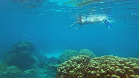 Мальдивы : Girl snorkelling underwater among of fish and corals