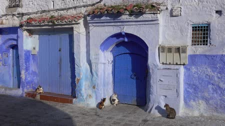 марокканский : Cats on traditional old blue street with inside Medina of Chefchaouen, Morocco, 4k Стоковые видеозаписи