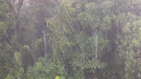 Heavy raining in the asian tropical forest, 4k Stock mozgókép