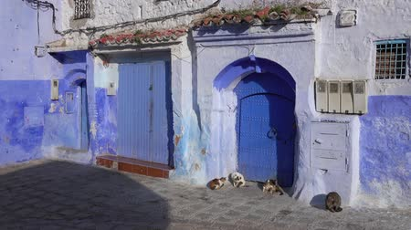 Cats on traditional old blue street inside Medina of Chefchaouen, Morocco, 4k
