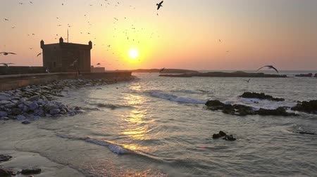 Essaouira fort silhouette with sunset sky background with flying seagulls in Morocco, 4k