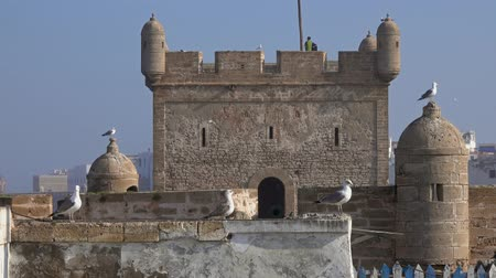 Essaouira fort and seagulls in Morocco, 4k Stock Footage