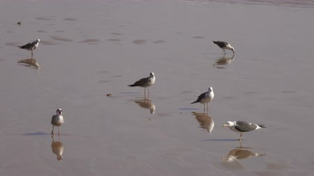 Seagulls on the beach reflecting in the water, 4k