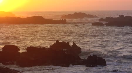 Seagulls scream and fly over rocks in the sea against the backdrop of the setting sun, 4k Wideo