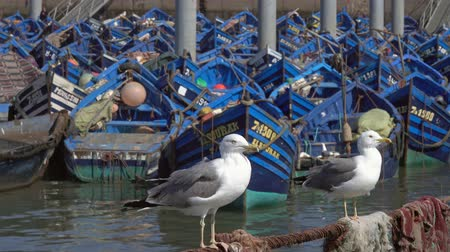 марокканский : Blue fishing boats in the port of Essaouira and seagulls in the foreground, Morocco, 4k Стоковые видеозаписи