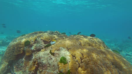 drift : Underwater world of Similan islands, Coral and tropical fish, Thailand