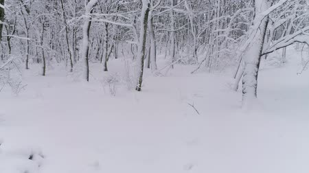 slider shot : Beautiful winter forest covered with snow, slider dolly shot 4k