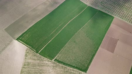 fas : Aerial landscape with agricultural fields in Morocco, Africa, tilt view 4k Stok Video