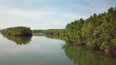 mangrove trees : Flying over the river in Phang Nga province, 4k Stock Footage
