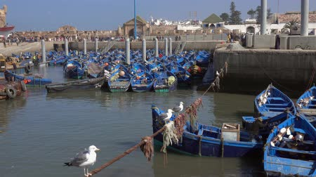 fas : Blue fishing boats in the port of Essaouira and seagulls in the foreground, Morocco, 4k Stok Video