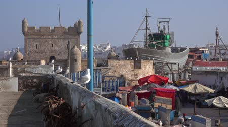 fas : Essaouira fort and seagulls in Morocco, 4k Stok Video