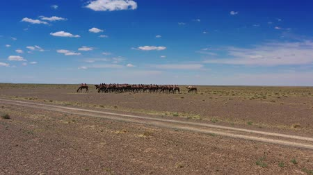 dvojitý : Aerial view of Bactrian camels group in Mongolia