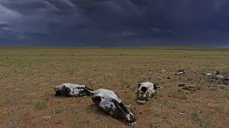 кучево дождевые облака : Skulls in steppe and storm mammatus clouds