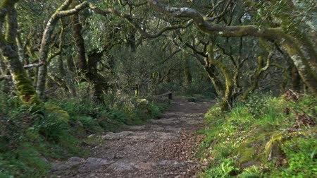 oak : Path in mysterious forest of Bussaco, Portugal