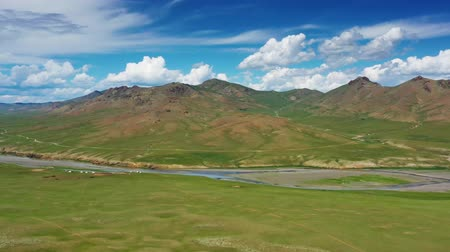 cow flies : Steppe and mountains landscape in Orkhon valley Stock Footage