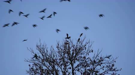 uçan : Birds flying away from the tree