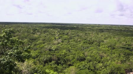 Канкун : Coba Mayan Panormic Ruins view over jungle video 4k Стоковые видеозаписи