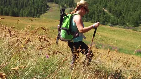 Woman hikes through field meadows, slow motion HD video under the sun of summer HD video Vídeos