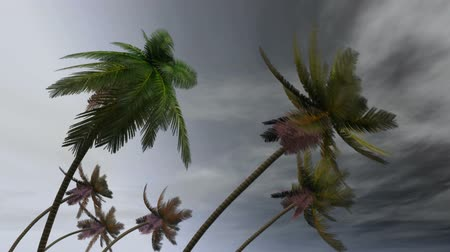 coconut palm tree : palms at hurricane Stock Footage
