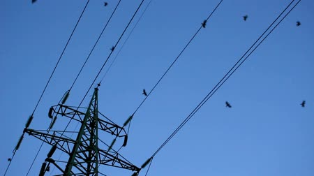 Against the background of high-voltage towers, ravens are flying in different directions. Stock Footage