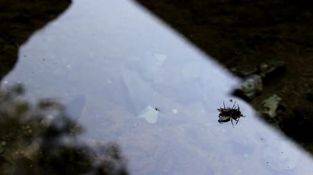 This fly was in a bad situation, its wings in the water and no chance of salvation.
