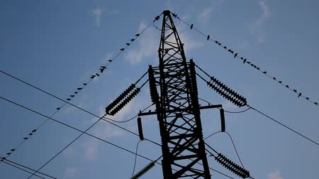 A lot of crows take off from the tower and high-voltage wires Stock Footage