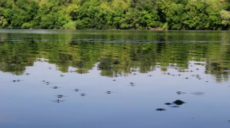 Insects near the riverbank, glide along the water. Stock Footage