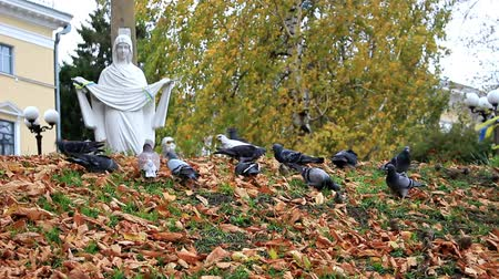 Pigeons and sparrows on the hill, the grains that fall from the trees, in the background, we see the sculpture of the Virgin Mary. Stock Footage