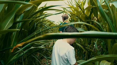 follow shot : slow motion shot or adventurous kids walking in a cornfield.